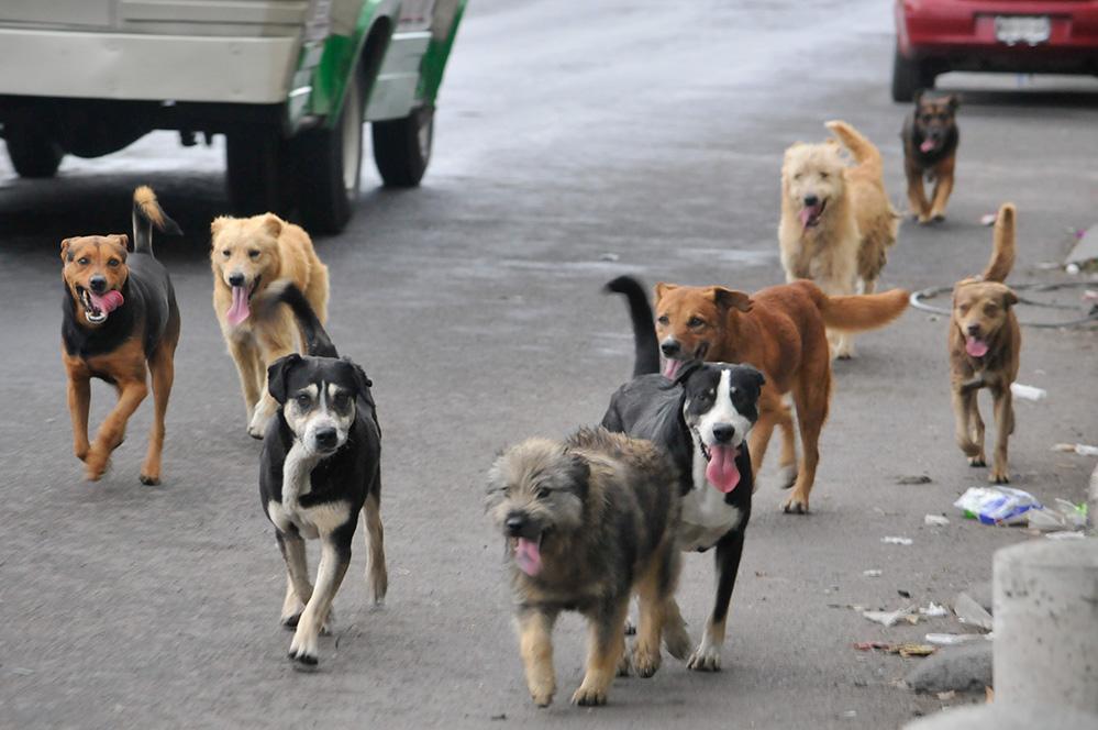 Resultado de imagen para perros callejeros santa ana