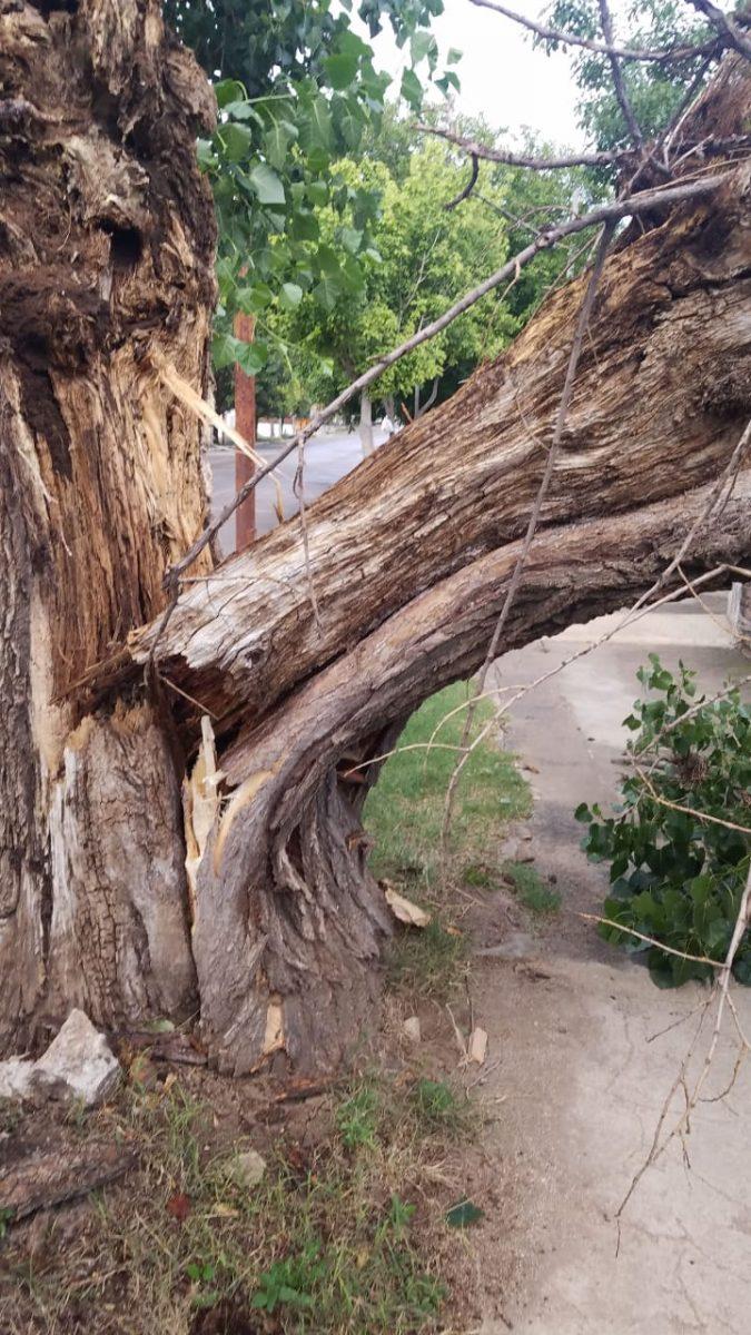 tormenta arbol caido parque san juan - Árboles caídos, techos volados y barrios sin luz es el saldo de la tormenta