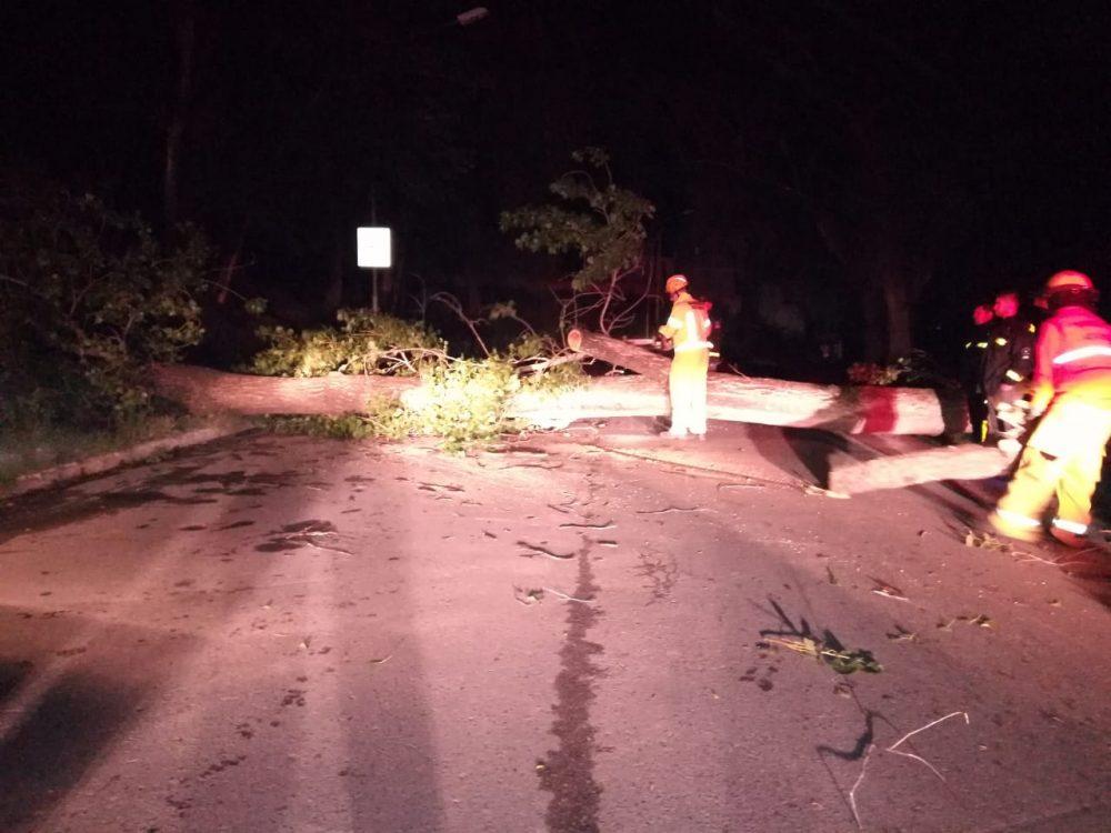tormenta arbol costanera policia - Árboles caídos, techos volados y barrios sin luz es el saldo de la tormenta