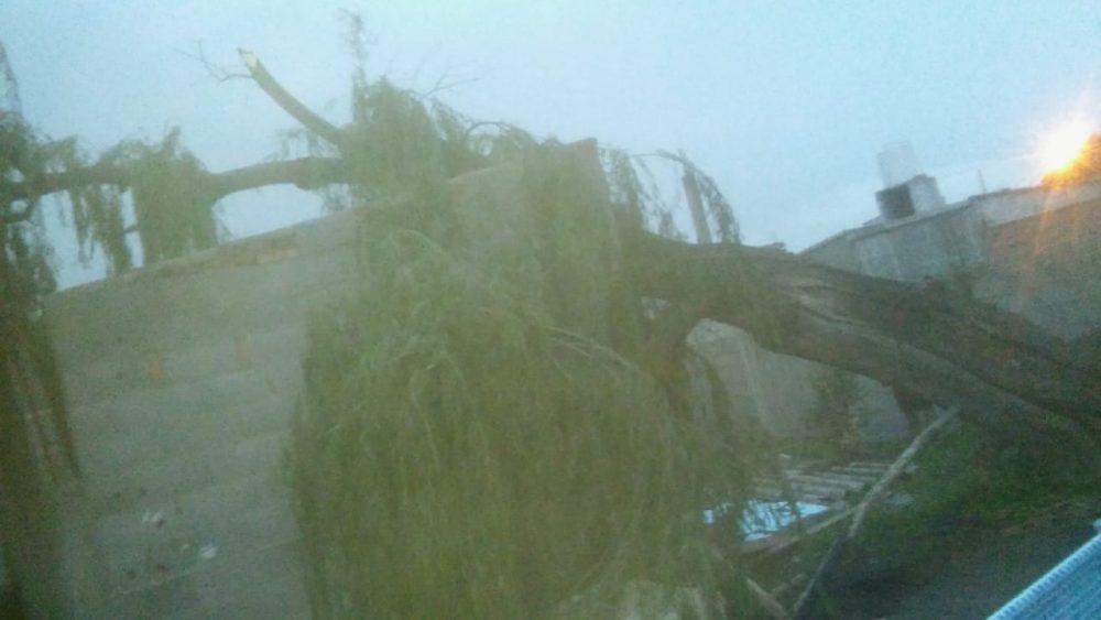 tormenta arbol san juan - Árboles caídos, techos volados y barrios sin luz es el saldo de la tormenta